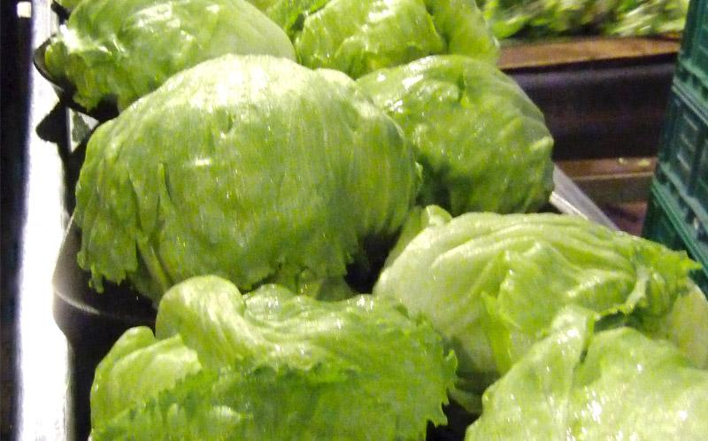 Lettuce_01
