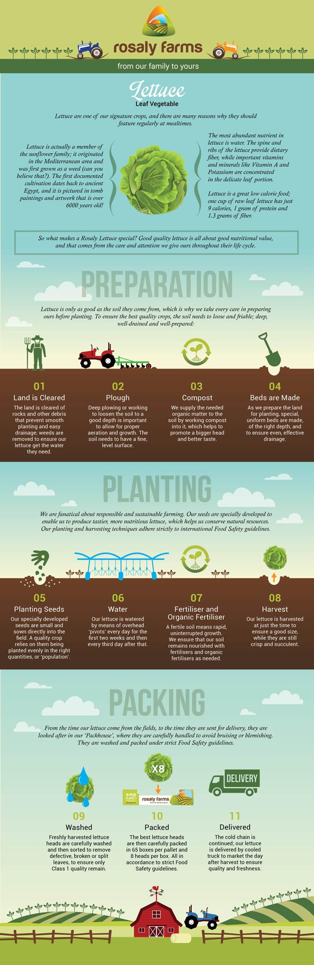 ROSALY_Lettuce-Infographic-v1